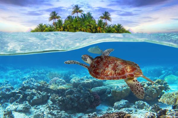 Significado de soñar con tortugas