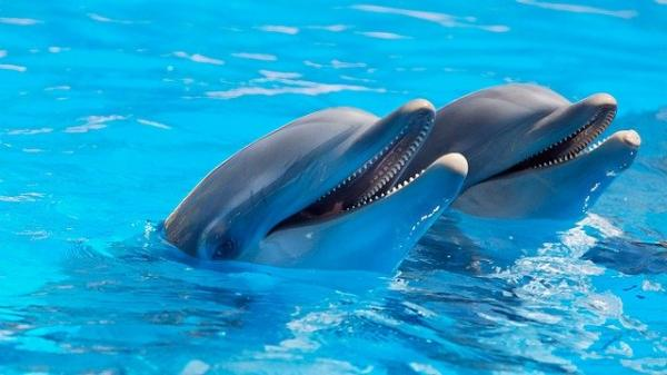 Qué significa soñar con delfines