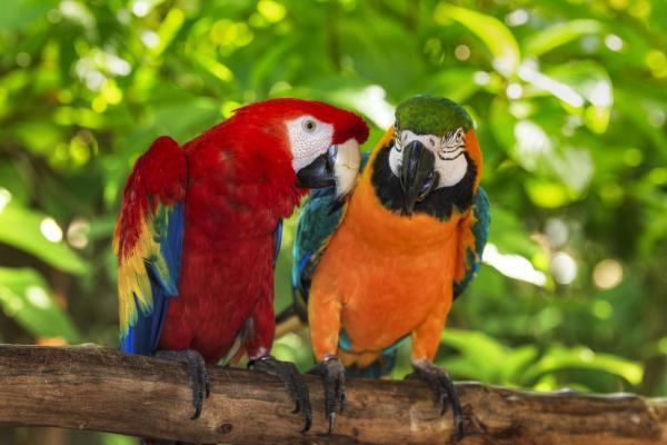 Qué significa soñar con pájaros - Qué significa soñar con pájaros de colores