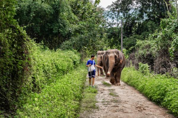 Qué significa soñar con elefantes - Qué significa soñar con elefantes que te persiguen