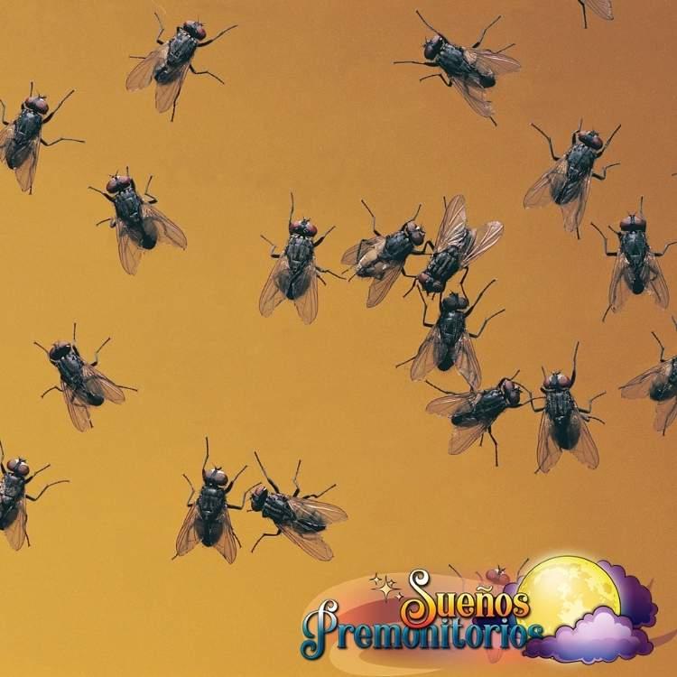 Soñé con muchas moscas